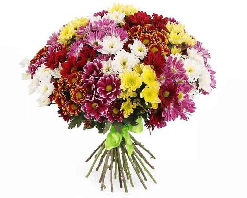 Как выглядит букет из 31 хризантемы